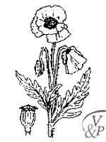 Comment se soigner avec une médecine naturelle et la plante Coquelicot.